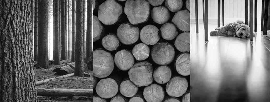 Gdzie szukać przewagi dla przemysłu drzewnego i meblarskiego